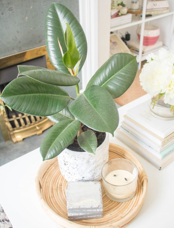 The Lazy Girl's Guide to Not Killing Your Plants