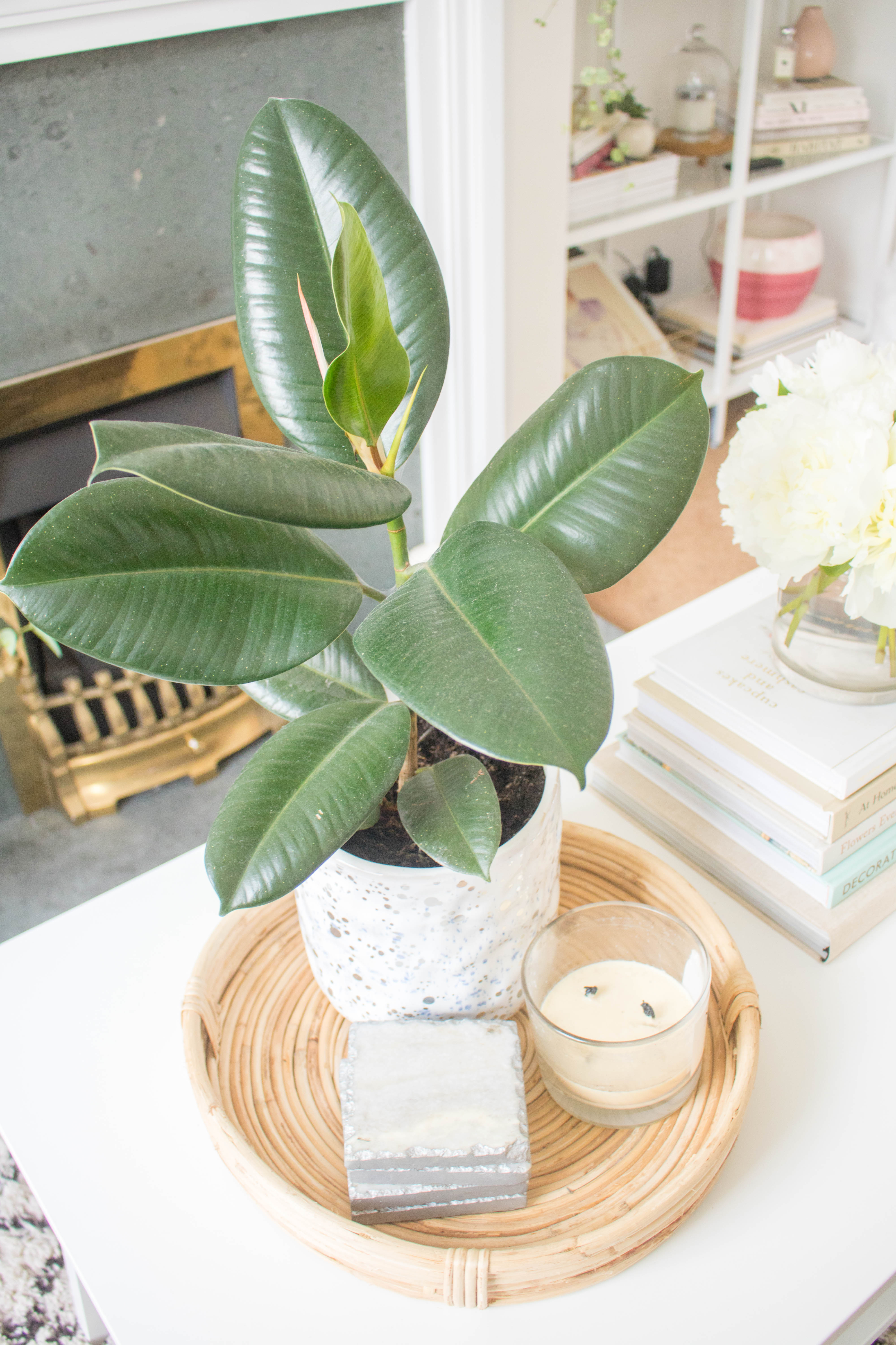 an edited lifestyle interiors guide not killing your plants
