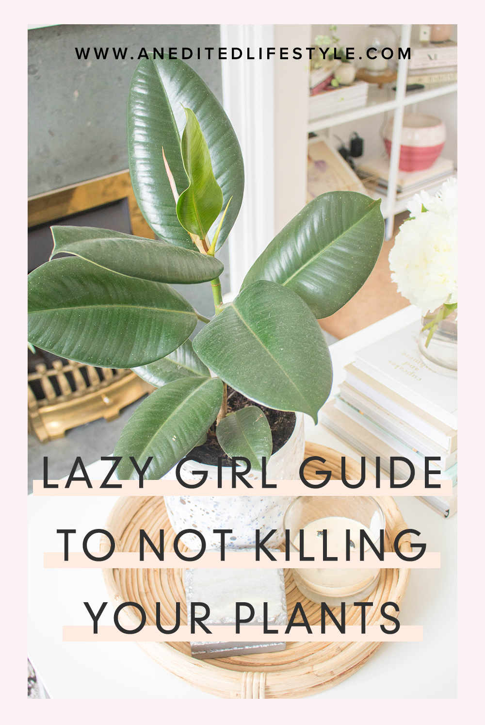 an edited lifestyle plant guide