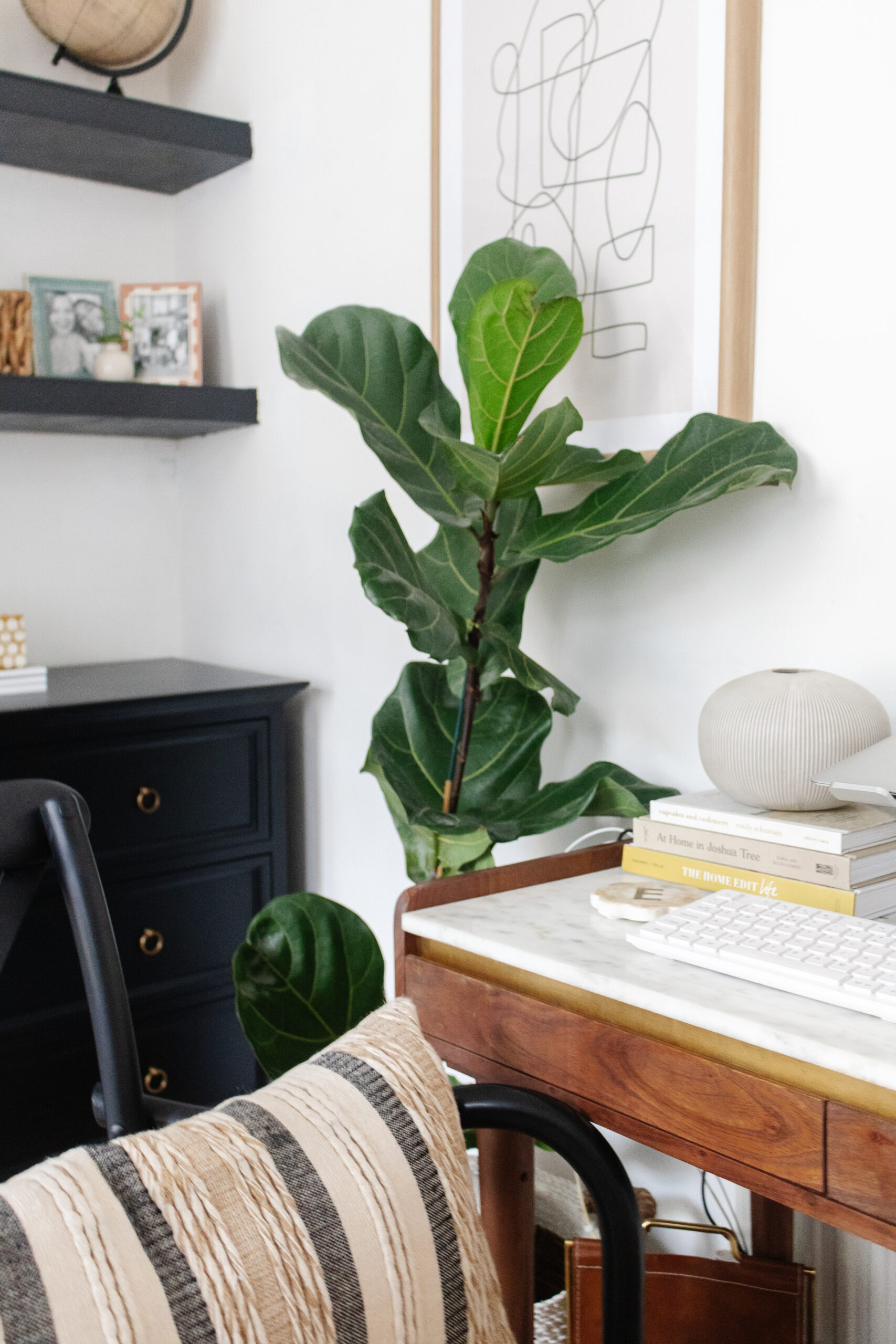 an edited lifestyle interiors indoor plants