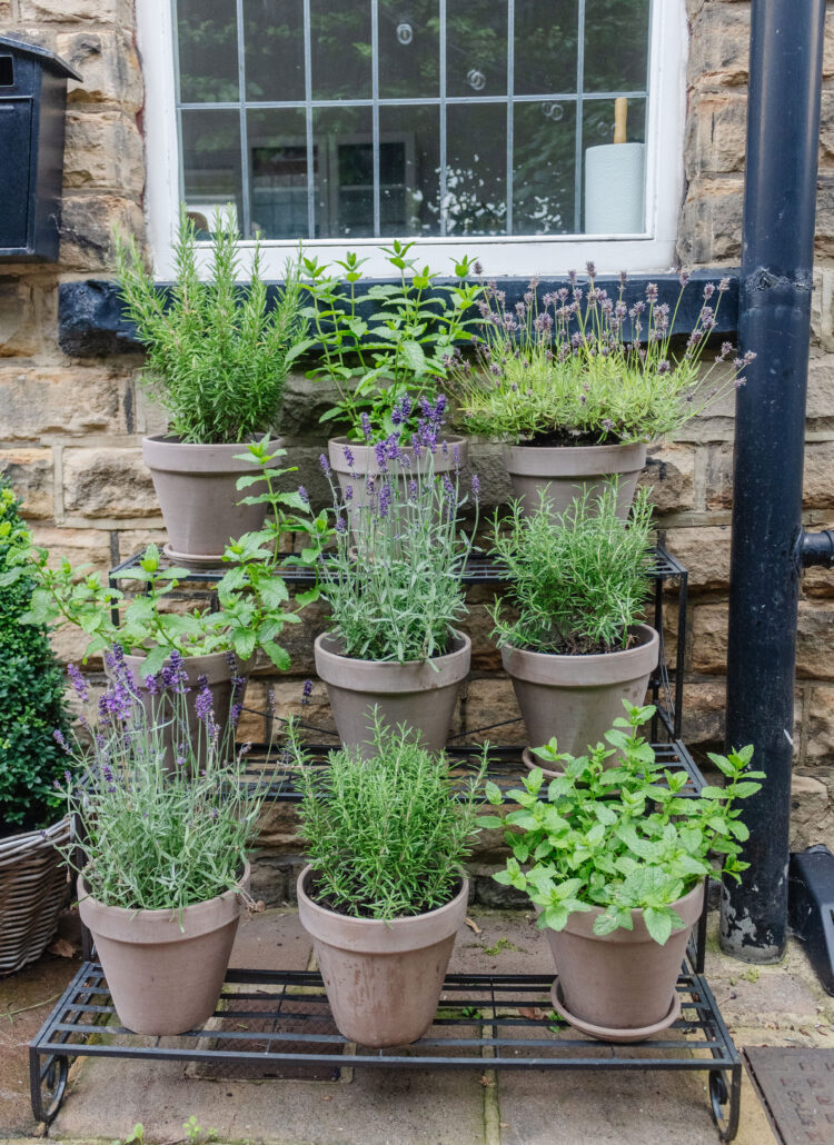 an edited lifestyle interiors plants for your garden pots